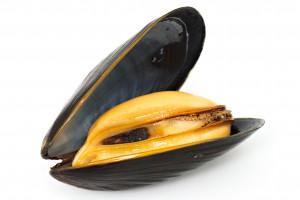 Moules aux poivrons