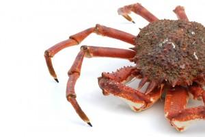 crabe araignée