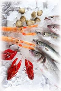 congeler des produits de la mer