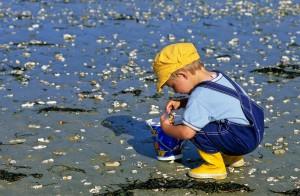 Petit garçon à la pêche à pieds