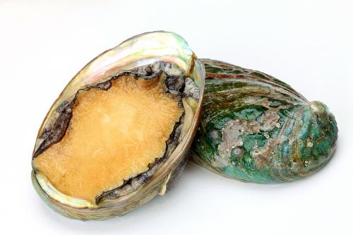ormeaux ou abalone